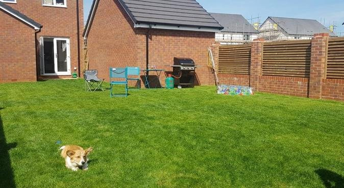 Cwtches and Company for Dogs, dog sitter in Newport