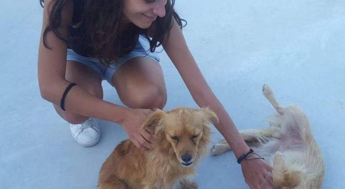 Divertimento e coccole non mancheranno mai, dog sitter a Bologna