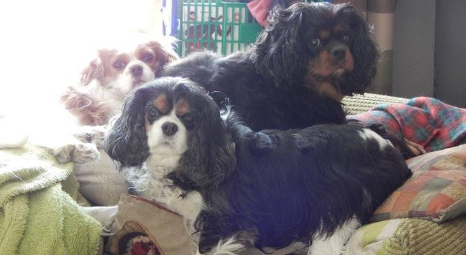 Happy dogs as a priority, dog sitter in Newcastle