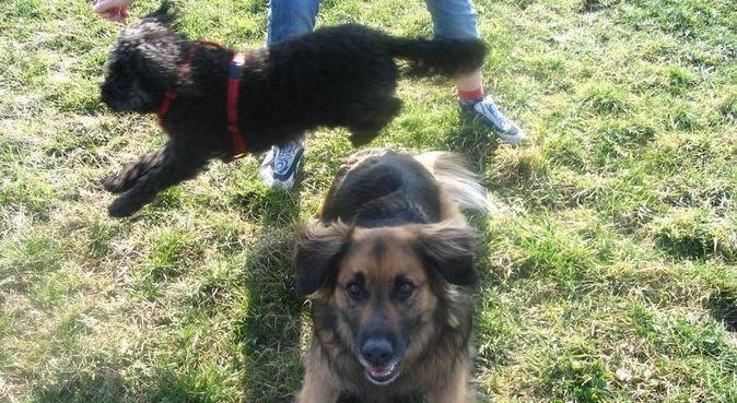 Responsible, experienced and loving dog sitter, dog sitter in Lincoln
