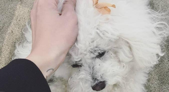 Dog lover looking for fluffy friends in London, dog sitter à London