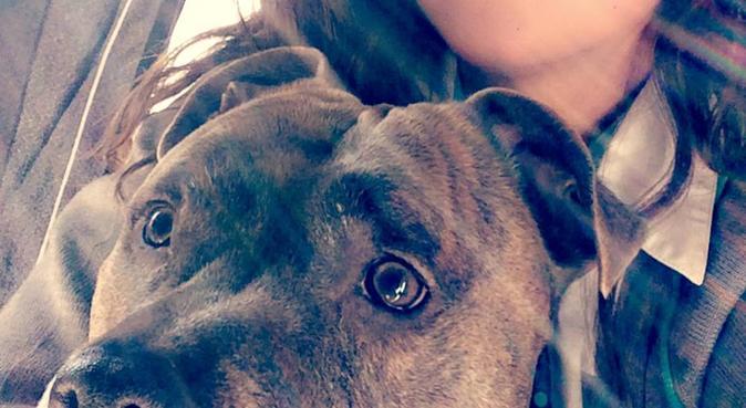 Jamais sans ma nounou préférée !, dog sitter à Wissous, France