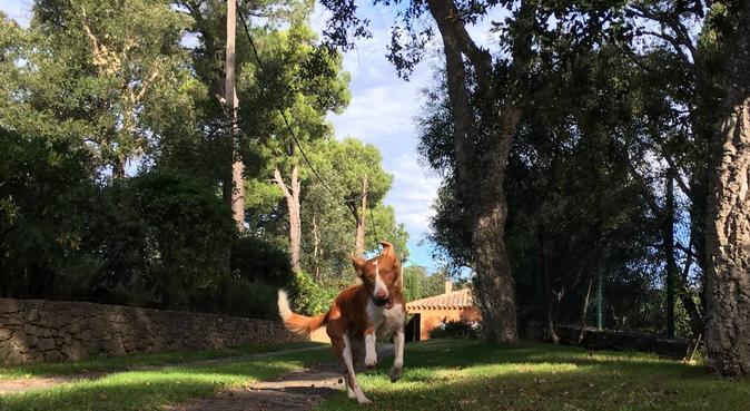 Hotel 5 estrellas perrunas en el bosque, canguro en Esclanyà