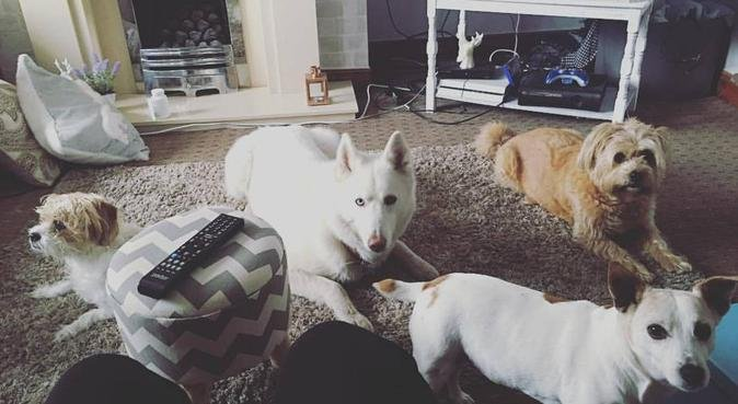 Doggy playdate in cosy Warrington terrace, dog sitter in Warrington