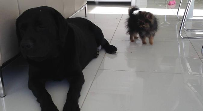 Garde de chiens sur Reims, dog sitter à Reims