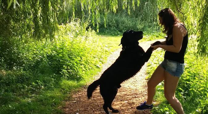 Dog walking in Harbone/Edgbaston, dog sitter in Birmingham
