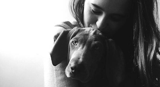Segundo hogar para tu perro 🐕, canguro en Collado Villalba, España