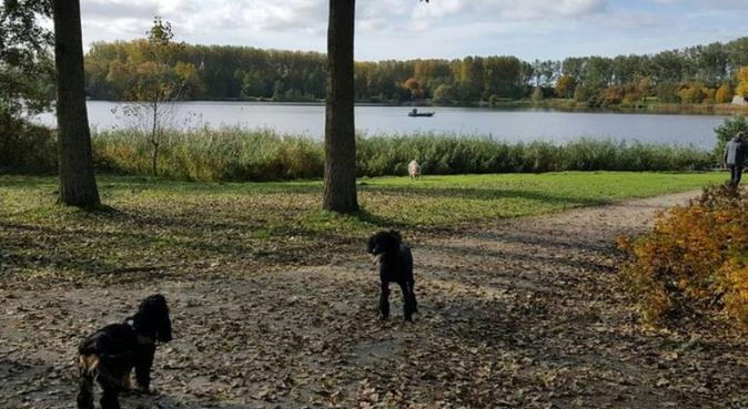Rustige en betrouwbare hondenliefhebber, hondenoppas in Hoofddorp