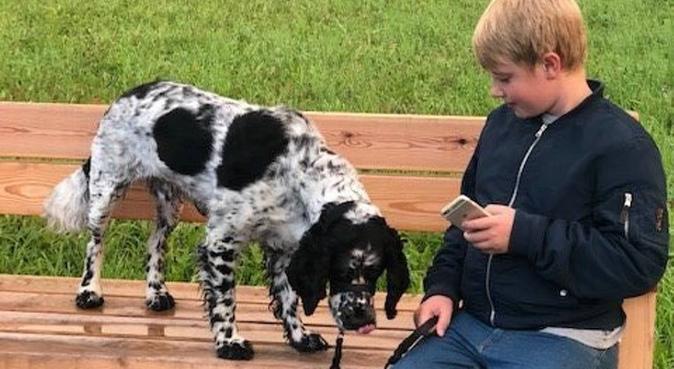 Hundälskande hundpassning i Sunnersta, hundvakt nära Uppsala, Sverige