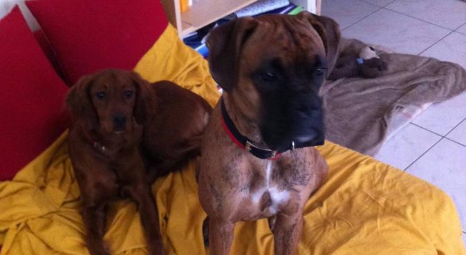 Garde boules de poils (Lyon 3), dog sitter à Lyon