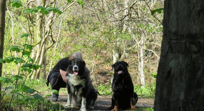 Home from Home all types of Care, dog sitter in Loughborough, UK