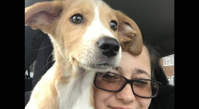 Experienced pet sitter, dog sitter in Peterborough, UK
