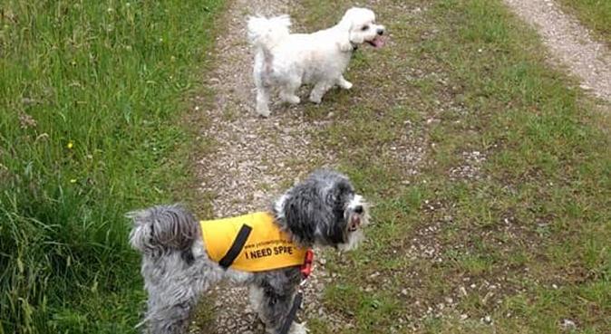 Canine Confidence Ltd-Reliable insured Dog Walker, dog sitter in Chesterton