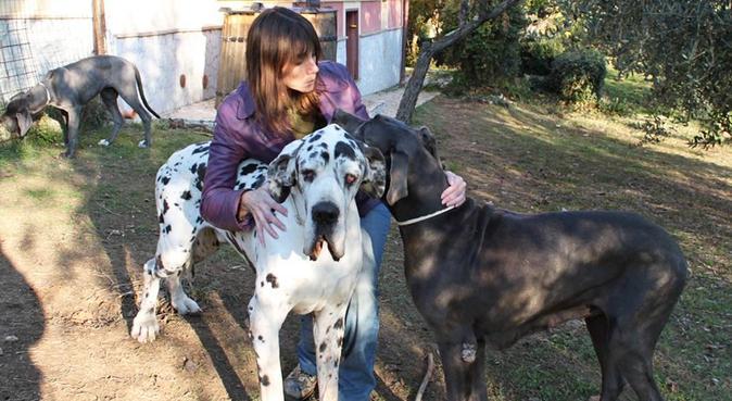 Compagnia, amore, coccole e lunghe passeggiate, dog sitter a Roma