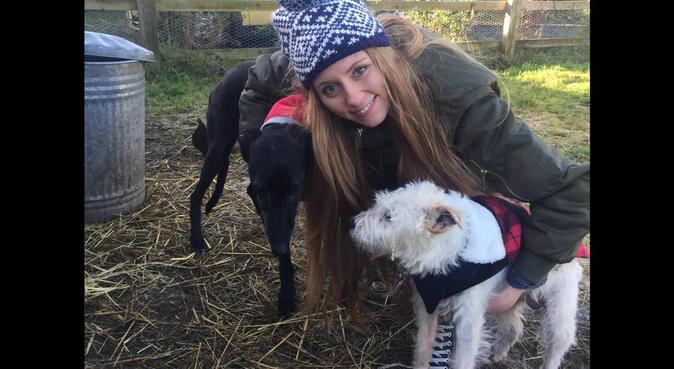 Wag & Bone Dog Walking Services, dog sitter in Hemel Hempstead