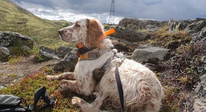Lange turer i fjellet eller korte turer på kvelden, hundepassere i Kløfta