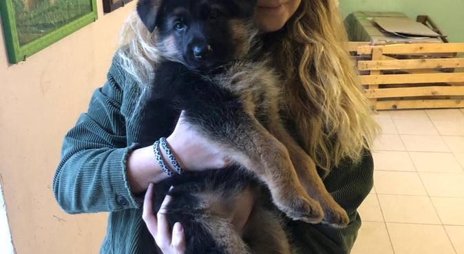 Giardino paradisiaco è migliore amica dei cagnoni, dog sitter a Premariacco, UD, Italia
