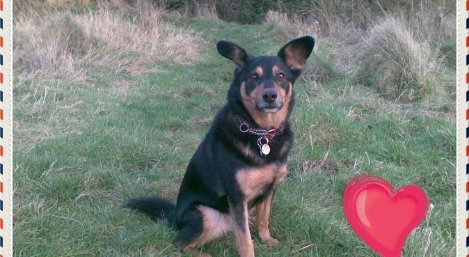 Loving dog friendly home backing onto open fields, dog sitter in Worcester