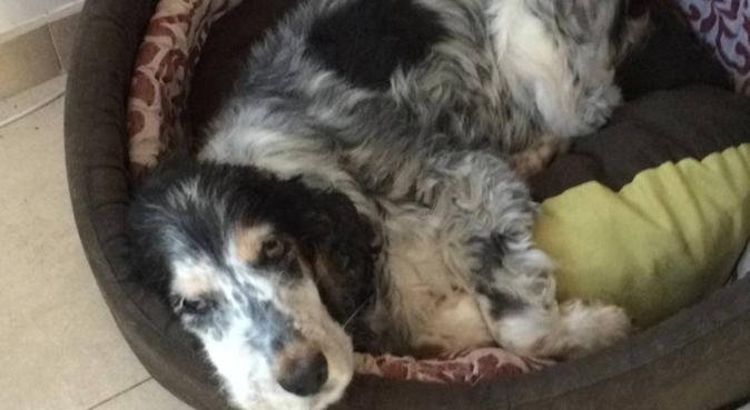 Dog lover in Leiden 🐶, hondenoppas in Leiden, Pays-Bas