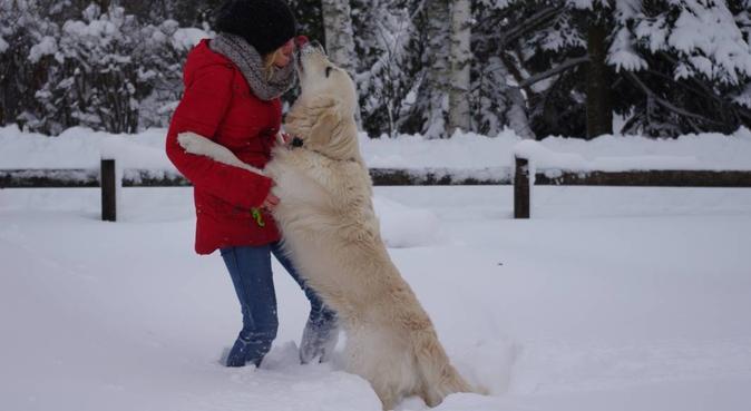 Hopp, lek och gos i skogar, ängar och i soffan!, hundvakt nära Vallentuna