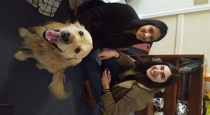 Dog walking around oxford, dog sitter in Oxford