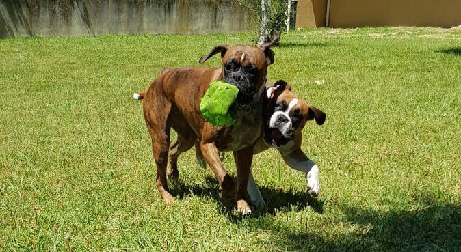 La garde comme chez vous!!, dog sitter à Annemasse