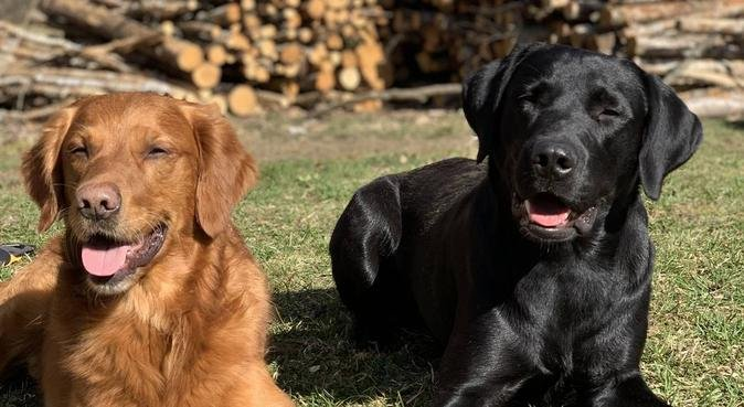 Hundägare som gärna passar er hund!, hundvakt nära Helsingborg