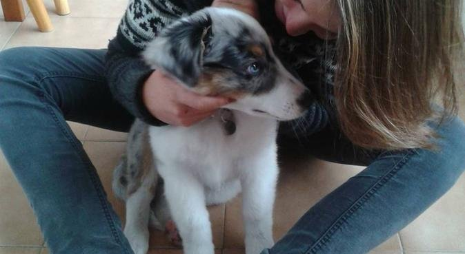 La balade des chiens heureux, dog sitter à Marseille