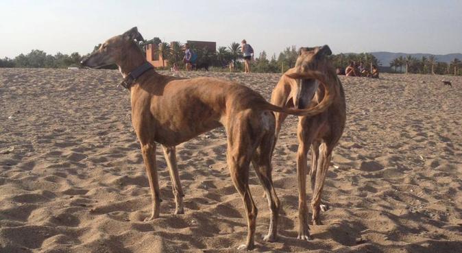 Estará en buenas manos!!!, dog sitter in Ibiza