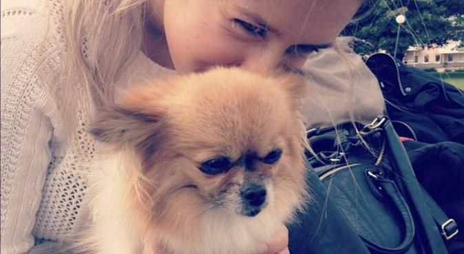 Kärleksfull student som älskar hundar!, hundvakt nära Uppsala
