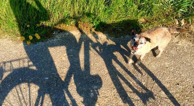 Friendly English Dog-walker in Amsterdam, hondenoppas in Amsterdam