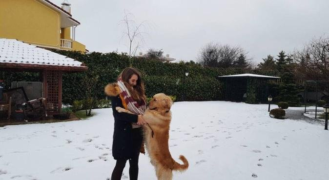 Dog Walking/Day Care in Berlin 💛, Hundesitter in Berlin
