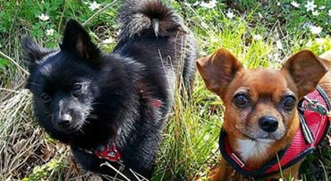 Naturnära aktiviteter & hemmiljö för små hundar, hundvakt nära Älta