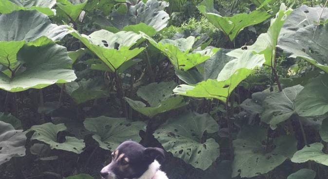 Liefde voor dieren in Amsterdam, hondenoppas in Amsterdam