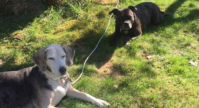 Waggy tail dog :-), hundepassere i Porsgrunn