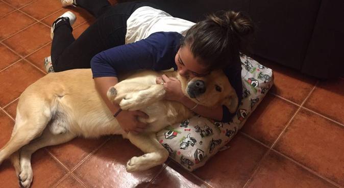 Amante de los perros, canguro en Moralzarzal
