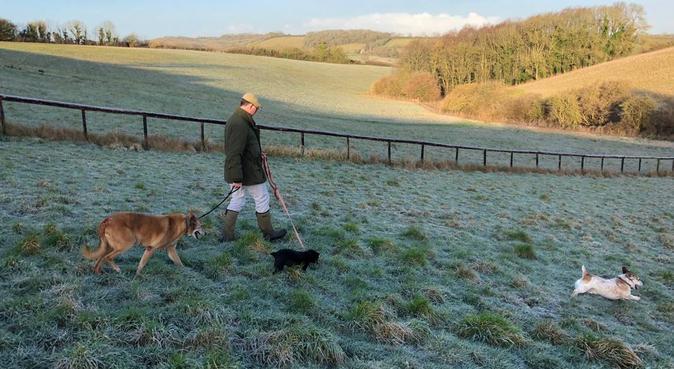 Fun on the Farm, dog sitter in Bristol, UK