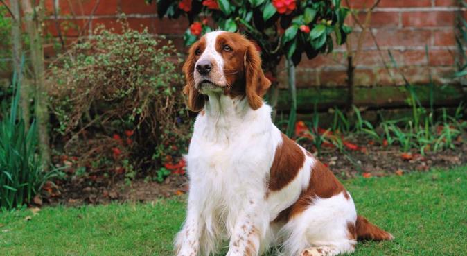 El lugar ideal para tu perro con amplio jardín, canguro en Zaragoza