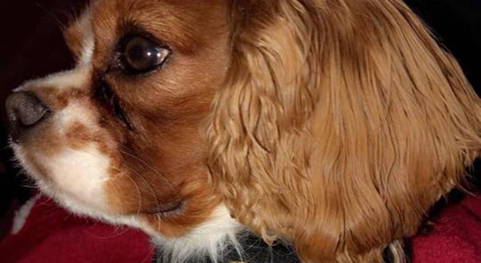 La maison des toutous, dog sitter à Woippy, France