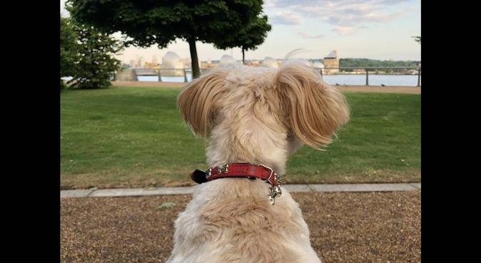 Happy Paws!, dog sitter in Silvertown