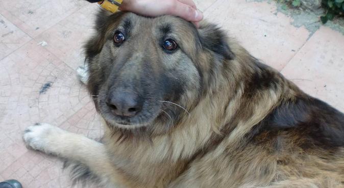 Passeig acollidor pels teus gossos!, canguro en Gerona
