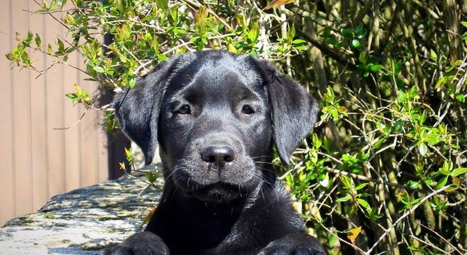 De l'affection pour toutes et tous, dog sitter à Talence, France