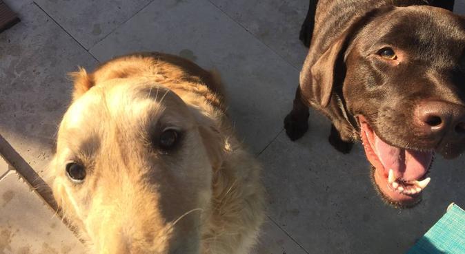 UN foyer chaleureux et plein de vie, dog sitter à Nîmes, France