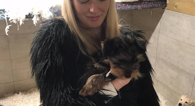 Dog Walking Fun in Bristol, dog sitter in Bristol