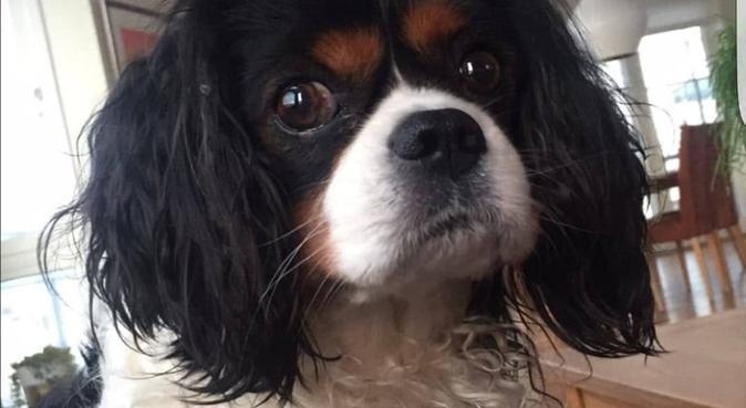 Hundeglad student søker firbeint kompis, hundepassere i Bodø