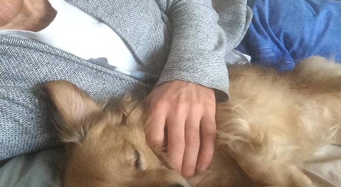 Lieve oppas voor honden, hondenoppas in Amsterdam