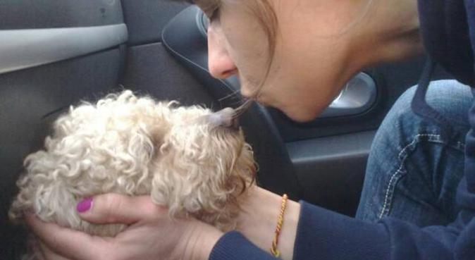 Amore e tante coccole, dog sitter a Genova