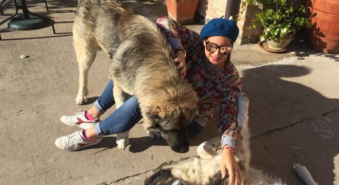 Coccole e corse per amici pelosoni 😍, dog sitter a Rimini
