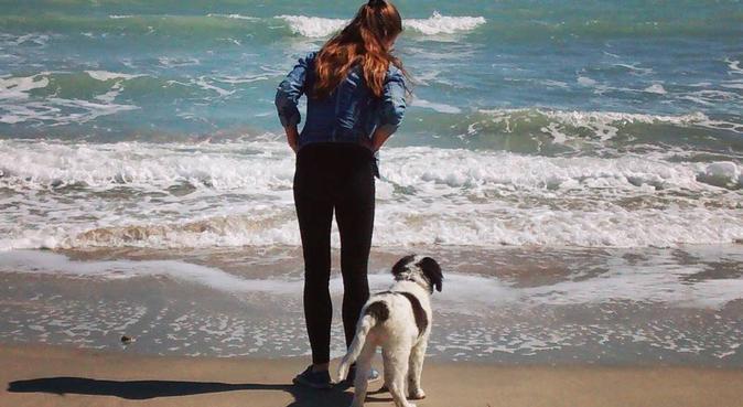De la compagnie pour les chiens, dog sitter à Lavérune