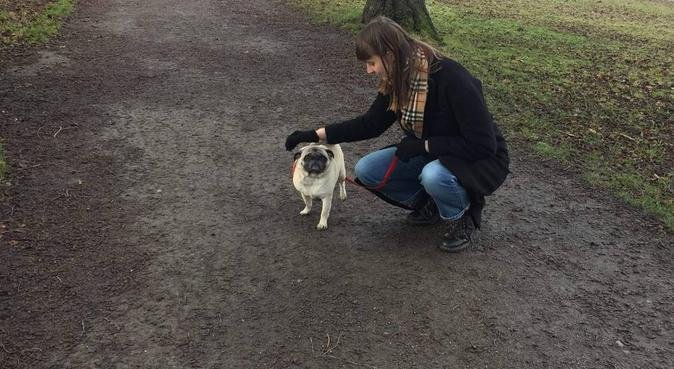 Ella's Doggy Day Care, dog sitter in Birmingham, UK